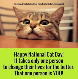 national cat day: Community Cats United, Inc. (Trap-Neuter-Return Community)  Happy National Cat Day!  It takes only one person  to change their lives for the better.  That one person is YOU!