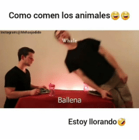 Crazy, Fail, and Fall: Como comen los animales@  Instagram:@Mehasjodido  Whale  Ballena  Estoy llorando Como comen los animales😂😂 Etiqueta a tus amigos que comen asi! 🤣 Sigueme @mehasjodido para más 🔝 _ _ fun funny vine girl boy photooftheday instasize awesome water crazy mad happy followforfollow likeforlike passion smile travel adventure jump fail fall fit fitness healthy me instagood instadaily instamood