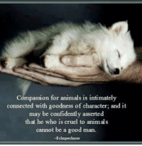 This is so true: Compassion for animals is intimately  connected with goodness of character; and it  may be confidently asserted  that he who is cruel to animals  cannot be a good man  -Schopenhauer This is so true
