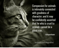 <3: Compassion for animals  is intimately connected  with goodness of  character, and it may  be confidently asserted  that he who is cruel to  animals cannot be a  good man.  Schopenhauer  facebook.com/CatingtonPost <3