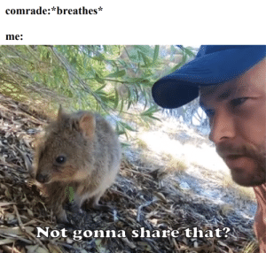 Cute, Thor, and Invest: comrade:*breathes*  me:  Not gonna share that? Quokka + Thor = PROFITS! Invest in cute formats quickly!
