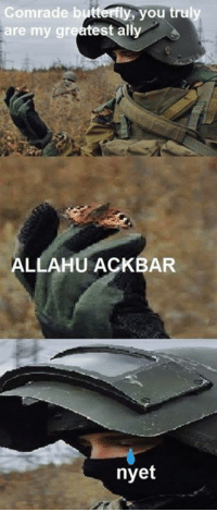 nyet: Comrade butterfly, you tru  st ally  are my gr  ALLAHUACKBAR  nyet