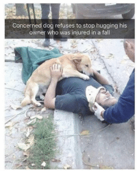 Fall, Dog, and Who: Concerned dog refuses to stop hugging his  owner who was injured in a fall