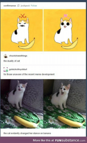 Meme, Banana, and Kittens: confirmancejoshpeck Follow  chuckdrawsthings  the duality of cat  gotsickofmyoldurl  for those unaware of the recent meme development  the cat evidently changed her stance on banana  More like this at FUNsubstance.com she also has kittens now