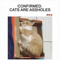 Cats Being Cats: CONFIRMED  CATS ARE ASSHOLES Cats Being Cats