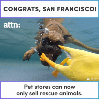 CONGRATS, SAN FRANCISCO!  attn:  GETTY  Pet stores can now  only sell rescue animals. Pet stores can only sell rescue animals now in San Francisco.
