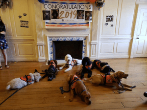 Dogs, Tumblr, and Blog: CONGRATULATIONS  Alma  120196  CLASS OF  GRAD  ilin Service Dogs Newnia  DREAMS doggos-with-jobs:  🎉 Illini Service Dog Graduation! 🎉  Congrats