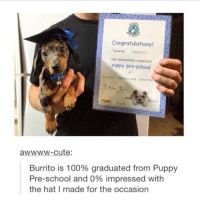 "Anaconda, Crazy, and Cute: Congratulations!  has suocesefully conpleted  puppy pre-school  et  awwww-cute:  Burrito is 100% graduated from Puppy  Pre-school and 0% impressed with  the hat I made for the occasion AldenRants 35-50 @Squizhii asked me to rant about pickles! Ew. I just. Ohh my gosh ew. I have such. Passionate emotions against pickles. Guys. You.....you probably think I'm being very lively at the moment because it's -not- the middle of the night but nooooope. I'm sure M....my extreme aversion to...pickles disguises just how incredibly exhausted I am right now by fueling me with. The rage...the rage of a thousand...ehh...people......things. WAIT A SECOND, I'M TYPING RIGHT NOW, SO IF I JUST KEEP TYPING IN ALL CAPS, PEOPLE WONT REALIZE THAT I'M ACTUALLY SAYING ALL OF THIS IN MY HEAD RIGHT NOW WITH THE UTMOST SENSE OF APATHY AND FATIGUE....OH RIGHT WE'RE ON THE TOPIC OF PICKLES. WHO DECIDED TO JUST. DUMP A CUMCUMBER. IN VINEGAR??? AND MORE IMPORTANTLY, WHY DID HE KEEP DOING IT?? HE WAS JUST, ""No, guys l-listen. It's. It's really good I swear I'm not just saying tha-Judith. Stop laughing at me, Judith. Judith, look-look at me, Judith I'm not crazy."" WAS PICKLING NAMED AFTER PICKLES OR WERE PICKLES NAMED AFTER PICKLING!? WHY DOES IT NOT MAKE SENSE EITHER WAY? WHY IS MR. NEZZER SO MUCH BIGGER THAN LARRY THE CUMCUMBER ON VEGGIE TALES?? HOW BIG WAS MR. NEZZER BEFORE HE WAS PICKLEFIED?? WAS HE BORN A PICKLE OR DID HE BECOME ONE? WHAT HORRID CRIMES DID HE COMMIT IN THE VEGGIE WORLD THAT SENTENCED HIM TO A PUNISHMENT AS GRUESOME AS GETTING SHRUNKEN IN VINEGAR? WHY ARE PICKLES RANDOMLY SOLD AT SPORTS EVENTS BUT EXCLUSIVELY IN PLASTIC PACKAGES? I need to go to bed"