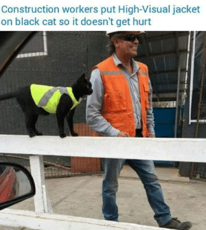 black cat: Construction workers put High-Visual jacket  on black cat so it doesn't get hurt