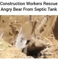 Bear rescued from septic tank - FULL VIDEO AT PMWHIPHOP.COM LINK IN BIO: Construction Workers Rescue  Angry Bear From Septic Tank  WHIPHOPCOM Bear rescued from septic tank - FULL VIDEO AT PMWHIPHOP.COM LINK IN BIO