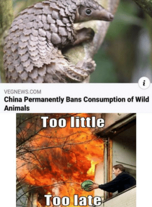 Context: The animal in the pic is the Pangolin, an ant eater famous in China for its meat and it's hunted and sold illegally. The virus got transferred to it from bats since they live in the same environment and it transferred the virus to us. At least that is what the news in my country have told.: Context: The animal in the pic is the Pangolin, an ant eater famous in China for its meat and it's hunted and sold illegally. The virus got transferred to it from bats since they live in the same environment and it transferred the virus to us. At least that is what the news in my country have told.