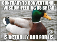 Actual, actual advice mallard.: CONTRARY TO CONVENTIONAL  WISDOM FEEDING  BREAD  LISACTUALLY BAD FORUS  mglip com Actual, actual advice mallard.