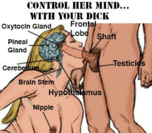 Shade, Tumblr, and Control: CONTROL HER MIND..  WITH YOUR DICK  Frontal  Oxytocin Gland  ob  haft  Plneal  Gland  Testicles  Cereb  Braln Stem  Hyp  mus  Nipple recaito:  All shade If your dick even is that big in the first place