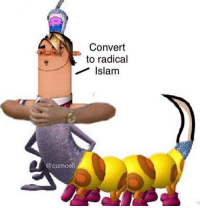 Islam, Radical, and Convert: Convert  to radical  Islam  @cumcel