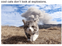 Cats, Cool, and Look: cool cats don't look at explosions