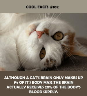 although: COOL FACTS #102  ALTHOUGH A CAT'S BRAIN ONLY MAKES UP  1% OF IT'S BODY MASS,THE BRAIN  ACTUALLY RECEIVES 20% OF THE BODY'S  BLOOD SUPPLY.
