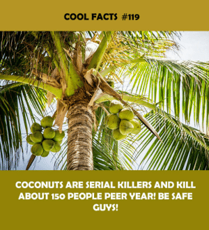 Facts, Cool, and Serial: COOL FACTS #119  COCONUTS ARE SERIAL KILLERS AND KILL  ABOUT 150 PEOPLE PEER YEAR! BE SAFE  GUYS!