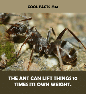 Facts, Cool, and Ant: COOL FACTS #34  THE ANT CAN LIFT THING$ 10  TIMES ITS OWN WEIGHT.