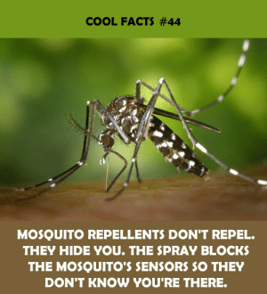 Hidee: COOL FACTS #44  MOSQUITO REPELLENTS DON'T REPEL.  THEY HIDE YOU. THE SPRAY BLOCKS  THE MOSQUITO'S SENSORS SO THEY  DON'T KNOW YOU'RE THERE.
