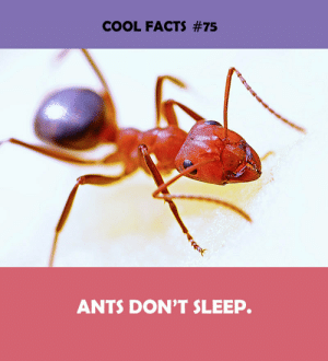 Facts, Cool, and Ants: COOL FACTS #75  ANTS DON'T SLEEP.