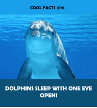 Facts, Cool, and Dolphins: COOL FACTS #78  DOLPHINS SLEEP WITH ONE EYE  OPEN!