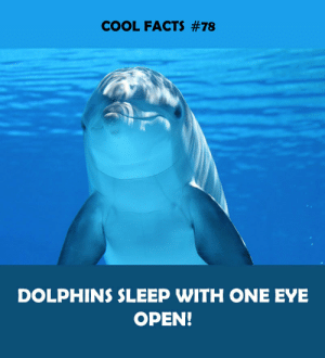 one eye: COOL FACTS #78  DOLPHINS SLEEP WITH ONE EYE  OPEN!