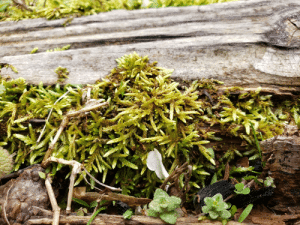 Cool moss growing on old railroad ties Picture i took: Cool moss growing on old railroad ties Picture i took