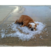 Cooling off in the summer heat: Cooling off in the summer heat