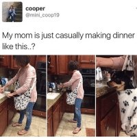 Follow me @antisocialtv @lola_the_ladypug @x__social_butterfly__x @x__antisocial_butterfly__x: cooper  @mini_coop19  My mom is just casually making dinner  like this..? Follow me @antisocialtv @lola_the_ladypug @x__social_butterfly__x @x__antisocial_butterfly__x