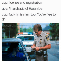Memes, 🤖, and Cops: cop: license and registration  guy: hands pic of Harambe  cop: fuck i miss him too. You're free to  go  drgrayfang Snapchat: dankmemesgang