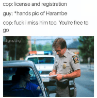 Fucking, Free, and Fuck: cop: license and registration  guy: *hands pic of Harambe  cop: fuck i miss him too. You're free to  go  drgrayfang