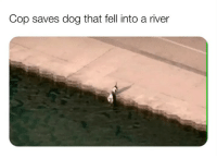 "Chicago, Kanye, and Memes: Cop saves dog that fell into a river This happened in Chicago by the way. Poor doggo...our waterways dirty as FVCK...he needed ""30 showers"" after this *kanye voice* 😩😂😍"