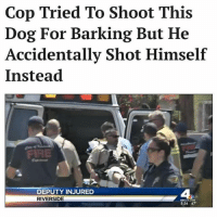 Life comes at you fast @jerrynews: Cop Tried To Shoot This  Dog For Barking But He  Accidentally Shot Himself  Instead  FIRE  DEPUTY INJURED  RIVERSIDE  4  5:36 67 Life comes at you fast @jerrynews