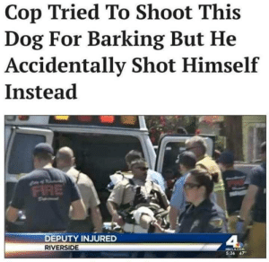 Dank, Memes, and Police: Cop Tried To Shoot This  Dog For Barking But He  Accidentally Shot Himself  Instead  DEPUTY INJURED  RIVERSIDE  536 67 Karma Police by limpbizkitdid911 FOLLOW HERE 4 MORE MEMES.