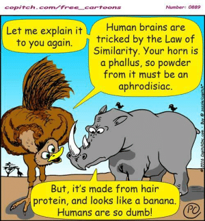 An ostrich explains to a rhino why people are killing him for his horn: copitch. com free cartoons  Number: 0889  Human brains are  Let me explain it  to you again. tricked by the Law of  Similarity. Your horn is  a phallus, so powder  from it must be an  aphrodisiac.  But, it's made from hair  protein, and looks like a banana  Humans are so dumb An ostrich explains to a rhino why people are killing him for his horn