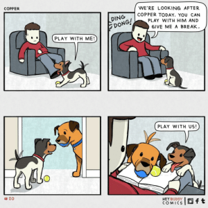 play with me [oc]: COPPER  WE'RE LOOKING AFTER  COPPER TODAY. YOU CAN  DING  PLAY WITH HIM AND  DONG!  DONG!  GIVE ME A BREAK.  PLAY WITH ME!  PLAY WITH US!  # 20  HEY BUDDY  COMICS  Oft play with me [oc]