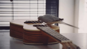 copperbadge:  serotina:  Dirby woke us up at 8 AM with another impromptu ukulele serenade. this little one brings so much happiness.  Combining birds and ukuleles, appealing to many of my interests! : copperbadge:  serotina:  Dirby woke us up at 8 AM with another impromptu ukulele serenade. this little one brings so much happiness.  Combining birds and ukuleles, appealing to many of my interests!