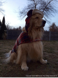 Do any of my furiends wear a hat and coat like me when its fweezing out!? Goodnight everyone and please keep my furiend Reggie in your thoughts and prayers as he has crossed the Rainbow Bridge. Thank you❤️: Copyright 2016 Ray Charles The Golden Retriever Do any of my furiends wear a hat and coat like me when its fweezing out!? Goodnight everyone and please keep my furiend Reggie in your thoughts and prayers as he has crossed the Rainbow Bridge. Thank you❤️