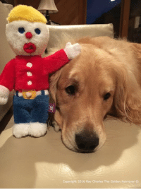 Wook what our friend Renee sent us! Mr. Bill dolls! Jack O got one too! Have a great day everyone!: Copyright 2016 Ray Charles The Golden Retriever Wook what our friend Renee sent us! Mr. Bill dolls! Jack O got one too! Have a great day everyone!