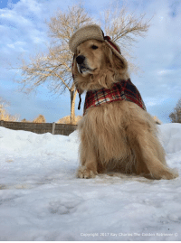 What a bootiful winter day it was today! Plenty of sunshine and not too cold! Have a great night everyone and please keep my furiend Roman in your thoughts and prayers as he has crossed the Rainbow Bridge. Thank you❤: Copyright 2017 Ray Charles The Golden Retriever What a bootiful winter day it was today! Plenty of sunshine and not too cold! Have a great night everyone and please keep my furiend Roman in your thoughts and prayers as he has crossed the Rainbow Bridge. Thank you❤