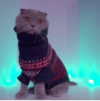 Milla's infamous Drake cameo that ended up on the cutting room floor 🎬😹...🎤You used to call me on my cell phone...😹 #hotlinebling #TBT #drake #millathecat #currentmood #uglysweater: cor  0 Milla's infamous Drake cameo that ended up on the cutting room floor 🎬😹...🎤You used to call me on my cell phone...😹 #hotlinebling #TBT #drake #millathecat #currentmood #uglysweater