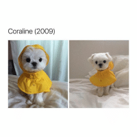 what a chute little puppy: Coraline (2009) what a chute little puppy