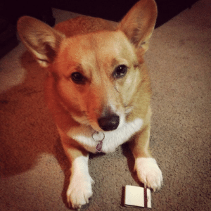 corgi-addict:  I told her she couldn't play with them. She was not pleased.: corgi-addict:  I told her she couldn't play with them. She was not pleased.