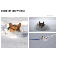 "Boner, Corgi, and Memes: corgi or snowplow  DrSmashlove Shout to u ladies that suntan on your belly at the beach and untie your bikini top so u ""don't get a tan line."" Sureeeeeee it's for the tan line, I see u - so the triangles on the Tetas are perfectly acceptable, but God forbid u have a teensie weensie line across your back. Nah. Hell nah. Y'all ain't slick. Y'all just wanna tantalize us. Y'all just wanna lay there with perfect side boob-softness on display with that string untied so that we get aching boners picturing y'all fine asses technically naked without that string in place. Well u know what, two can play at this game. Next time I see a girl doing this imma lay right next to her, remove my swimming shorts, and lay a napkin on my PP. Just a small napkin. Not even a cloth napkin but like a cocktail napkin - them lil square joints, and imma unfold it into a big square and lay it on my junk and then apply a small paper weight to it so when the wind blow, u all like ""OMG IMMA SEE HIS PP"" but that paperweight gon keep it right in place. Y'all wanna make it a nude beach, here go my barely covered PP - it's a nude beach now. And if y'all look over and wanna snicker and giggle I'm look at u deadass and say ""I have to do this. I don't want the tanlines."" LetsAllBePetty AllSummer2017 TeamPenisNapkin LehGo 😍😂😂😂"