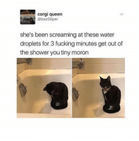 I'm so obsessed with Kehlani rn 🙏 I need help meme: corgi queen  @baz00 per  she's been screaming at these water  droplets for 3 fucking minutes get out of  the shower you tiny moron I'm so obsessed with Kehlani rn 🙏 I need help meme