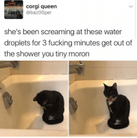 Corgi, Drake, and Kardashians: Corgi queen  @baz00per  she's been screaming at these water  droplets for 3 fucking minutes get out of  the shower you tiny moron 😂😂lmao - -( rp @kalesalad - - - - 420 memesdaily Relatable dank MarchMadness HoodJokes Hilarious Comedy HoodHumor ZeroChill Jokes Funny KanyeWest KimKardashian litasf KylieJenner JustinBieber Squad Crazy Omg Accurate Kardashians Epic bieber Weed TagSomeone hiphop trump rap drake