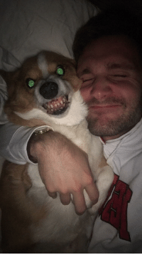 Tumblr, Blog, and Nice: corgikistan:  All I wanted was a nice picture with Sammy