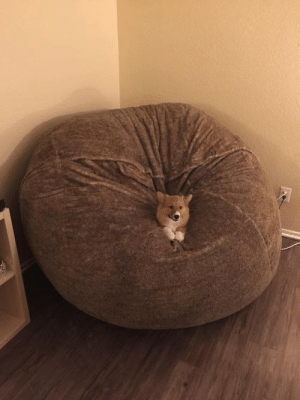corgikistan:  I think Butters likes his new bed!: corgikistan:  I think Butters likes his new bed!
