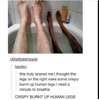 Funny, Memes, and Tumblr: corpOratehippie  hayleu:  this truly scared me i thought the  legs on the right were some crispy  burnt up human legs i need a  minute to breathe  CRISPY BURNT UP HUMAN LEGS Follow us for more funny tumblr & textposts!! 😂🤣🤣