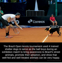 Dogs, Memes, and Brazil: Correos  The Brazil Open tennis tournament used 4 trained  shelter dogs to serve as the ball boys during an  exhibition match to bring awareness to Brazil's street  animals, promote their adoption, and show that  well-fed and well-treated animals can be very happy.  fb.com/factsweird